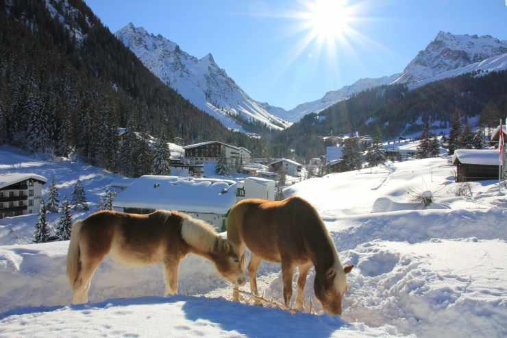 Pferde, Tiefschnee, Hotel Mateera, Gargellen, Montafon, Vorarlberg