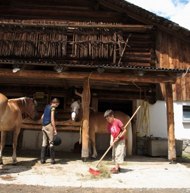 Riding stable with Haflinger mares