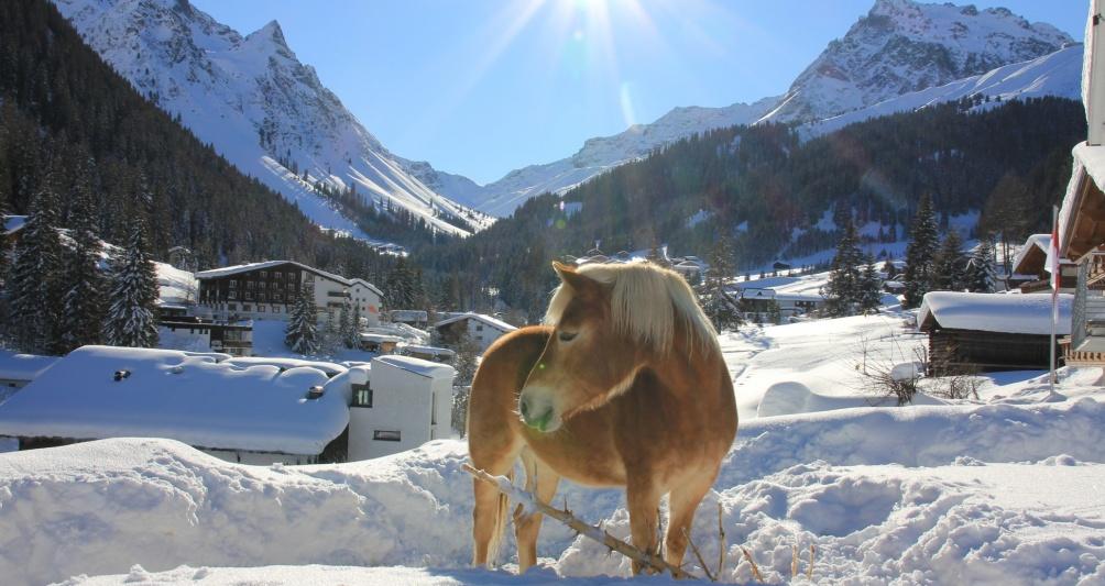 Pferde im Schnee, Reiten in Vorarlberg, Winterhotel, Winterurlaub